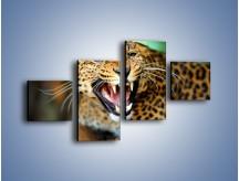 Obraz na płótnie – Jaguar z pazurem – czteroczęściowy Z184W3