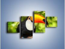 Obraz na płótnie – Kolorowy dziób tukana – czteroczęściowy Z195W3