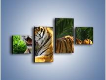Obraz na płótnie – Cała duma tygrysa – czteroczęściowy Z199W3