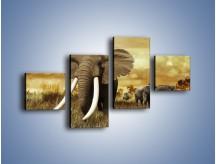 Obraz na płótnie – Drogocenne kły słonia – czteroczęściowy Z214W3