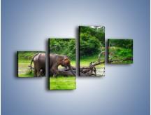 Obraz na płótnie – Kąpiel ze słoniem – czteroczęściowy Z216W3