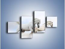 Obraz na płótnie – Białe konie i biały śnieg – czteroczęściowy Z239W3