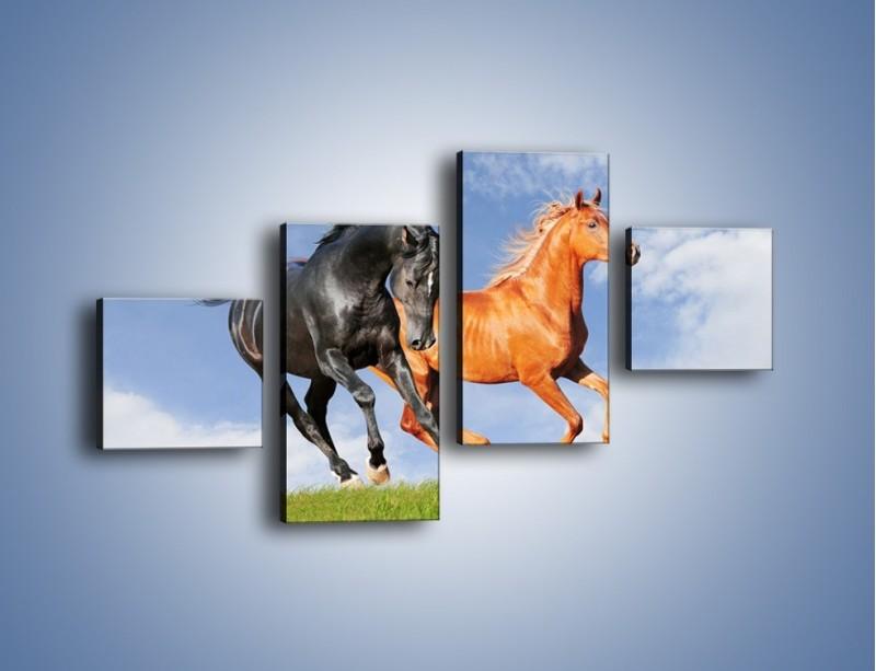 Obraz na płótnie – Czarny rudy i koń – czteroczęściowy Z241W3