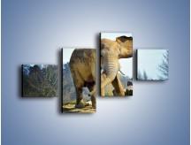 Obraz na płótnie – Ciężkie życie słonia – czteroczęściowy Z273W3