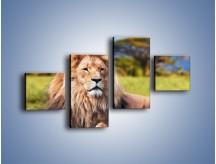 Obraz na płótnie – Dostojny lew na sawannie – czteroczęściowy Z282W3