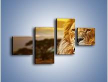 Obraz na płótnie – Dojrzały wiek lwa – czteroczęściowy Z303W3