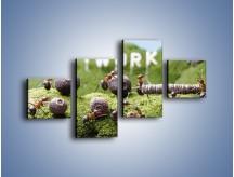 Obraz na płótnie – Ciężka praca mrówek – czteroczęściowy Z308W3