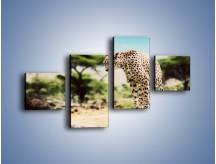 Obraz na płótnie – Cała zwinność geparda – czteroczęściowy Z315W3