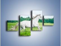 Obraz na płótnie – Biały koń i leśna polana – czteroczęściowy Z317W3