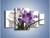 Obraz na płótnie – Biało-fioletowe krokusy – czteroczęściowy K020W4