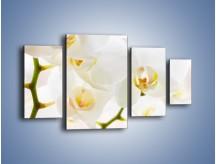 Obraz na płótnie – Białe storczyki blisko siebie – czteroczęściowy K811W4