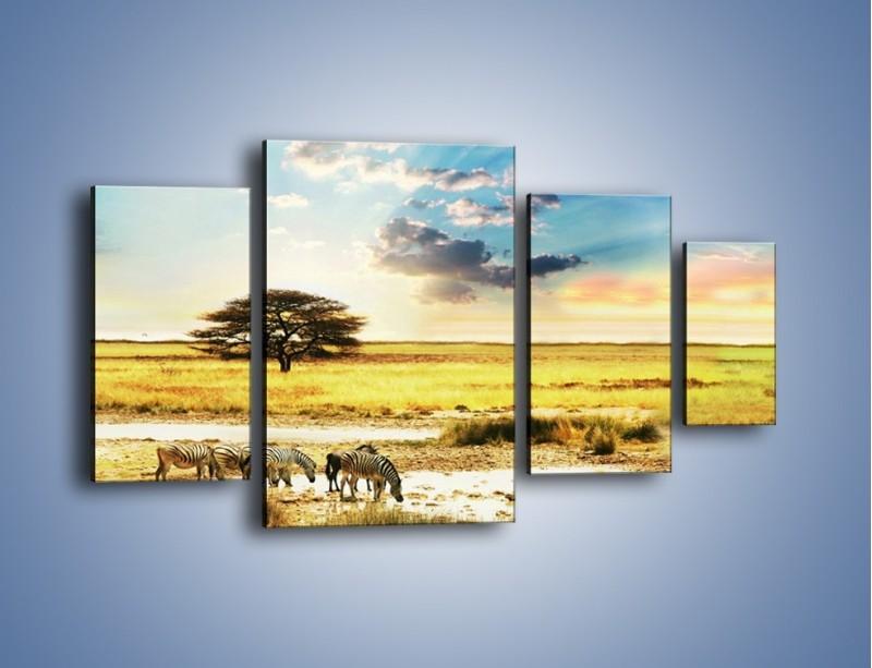 Obraz na płótnie – Zebry na sawannie – czteroczęściowy KN1298AW4