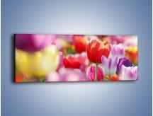 Obraz na płótnie – Boso przez tulipany – jednoczęściowy panoramiczny K344