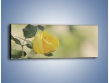 Obraz na płótnie – Cytryna odbita w róży – jednoczęściowy panoramiczny K347