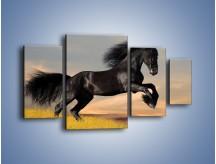 Obraz na płótnie – Czarny koń w galopie – czteroczęściowy Z008W4