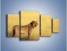 Obraz na płótnie – Czujny wzrok lwicy – czteroczęściowy Z091W4