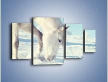 Obraz na płótnie – Arab w śnieżnym puchu – czteroczęściowy Z144W4