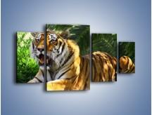 Obraz na płótnie – Cała duma tygrysa – czteroczęściowy Z199W4