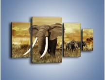 Obraz na płótnie – Drogocenne kły słonia – czteroczęściowy Z214W4