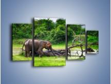 Obraz na płótnie – Kąpiel ze słoniem – czteroczęściowy Z216W4
