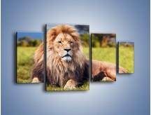 Obraz na płótnie – Dostojny lew na sawannie – czteroczęściowy Z282W4