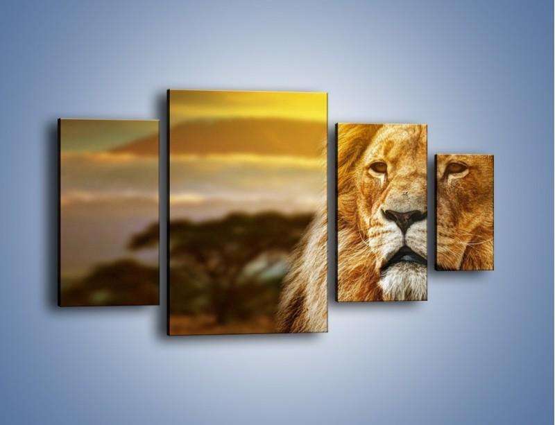 Obraz na płótnie – Dojrzały wiek lwa – czteroczęściowy Z303W4