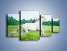 Obraz na płótnie – Biały koń i leśna polana – czteroczęściowy Z317W4