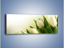 Obraz na płótnie – Białe tulipany na zgodę – jednoczęściowy panoramiczny K400