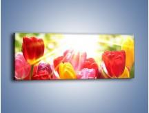Obraz na płótnie – Bajecznie słoneczne tulipany – jednoczęściowy panoramiczny K428
