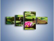 Obraz na płótnie – Ciemno-różowy nenufar na wodzie – czteroczęściowy K014W5
