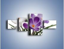 Obraz na płótnie – Biało-fioletowe krokusy – czteroczęściowy K020W5