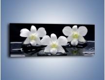 Obraz na płótnie – Biel w kwiecie nocą – jednoczęściowy panoramiczny K512
