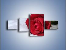 Obraz na płótnie – Bordowa róża na białej pościeli – czteroczęściowy K1023W5