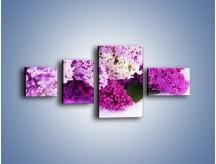 Obraz na płótnie – Bez w różnych kolorach – czteroczęściowy K389W5