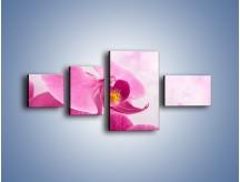 Obraz na płótnie – Ciemny róż w storczyku – czteroczęściowy K588W5