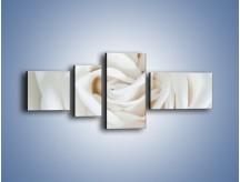 Obraz na płótnie – Biel róży za dnia – czteroczęściowy K709W5