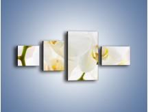 Obraz na płótnie – Białe storczyki blisko siebie – czteroczęściowy K811W5