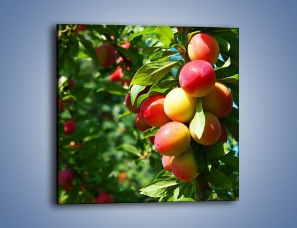 Obraz na płótnie – Drzewa pełne brzoskwiń – jednoczęściowy kwadratowy JN495