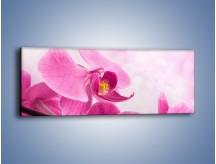 Obraz na płótnie – Ciemny róż w storczyku – jednoczęściowy panoramiczny K588