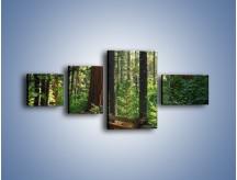 Obraz na płótnie – Chodźmy do lasu – czteroczęściowy KN611W5