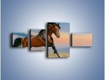 Obraz na płótnie – Brązowy koń na pustyni – czteroczęściowy Z011W5