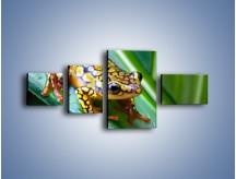Obraz na płótnie – Kolorowy płaz na liściu – czteroczęściowy Z026W5