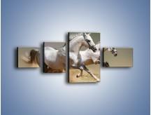 Obraz na płótnie – Białe konie w pustynnym galopie – czteroczęściowy Z055W5