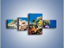 Obraz na płótnie – Fauna i kolorowi towarzysze – czteroczęściowy Z116W5