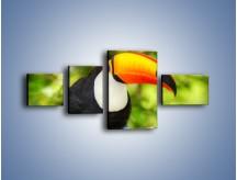 Obraz na płótnie – Kolorowy dziób tukana – czteroczęściowy Z195W5