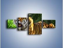Obraz na płótnie – Cała duma tygrysa – czteroczęściowy Z199W5