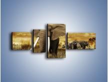 Obraz na płótnie – Drogocenne kły słonia – czteroczęściowy Z214W5