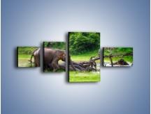 Obraz na płótnie – Kąpiel ze słoniem – czteroczęściowy Z216W5
