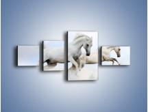 Obraz na płótnie – Białe konie i biały śnieg – czteroczęściowy Z239W5