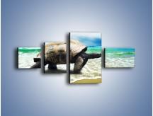 Obraz na płótnie – Jak tu nie kochać żółwi – czteroczęściowy Z251W5